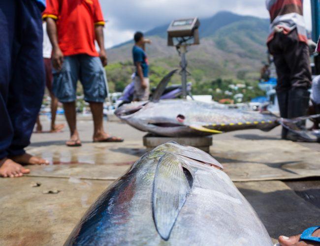 Cerita Tuna Dari Larantuka
